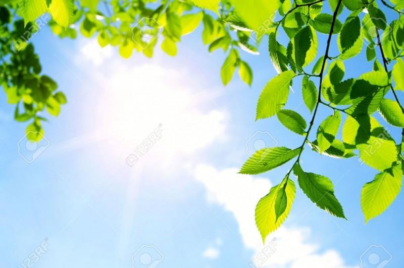 14186313 Les Feuilles Vertes Avec Rayon De Soleil Banque Dimages